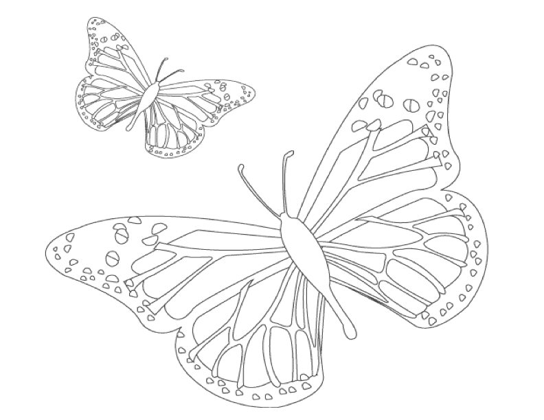 Flash cards for butterfly preschool coloring coloring pages for Butterfly coloring pages for kindergarten